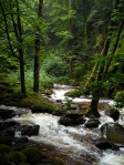 Forest stream photo