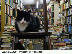 Bookstore with cat