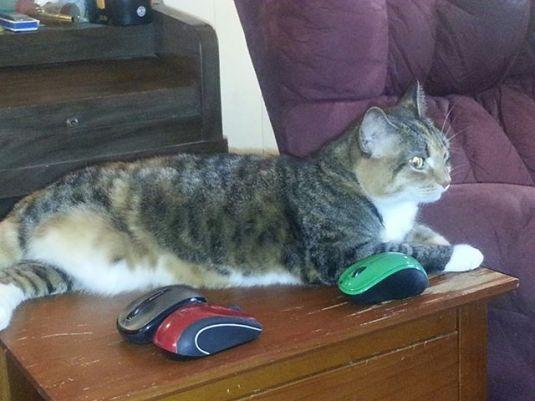 Lunesta loves mice!