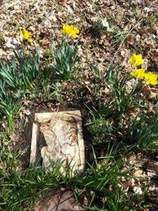 Garden - Lucky grave 2