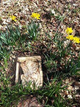 Grave of my golden retriever Lucky
