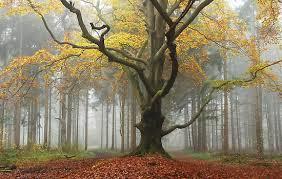 November crooked tree