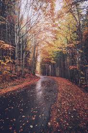 November road fallen leaves