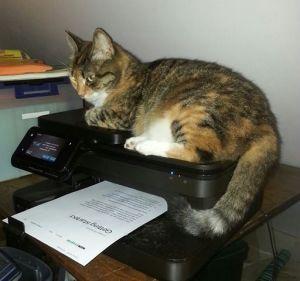 Lunesta on printer 7-27-14