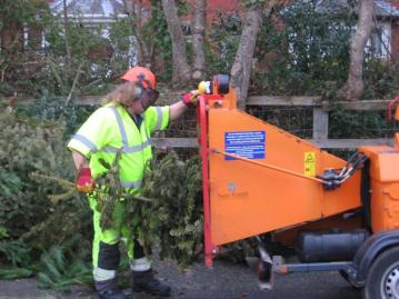 christmas_tree_chipping_uk