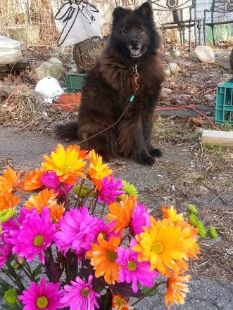 Sirius with bouquet 4-9-17